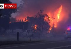 What is left after the Australian wildfires?